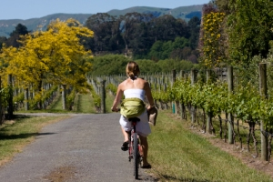 Hire a bike to tour the vineyards